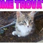 Tanti nomi per…il Gatto Senza Nome By Mike Fauna E Frenky Mangusta